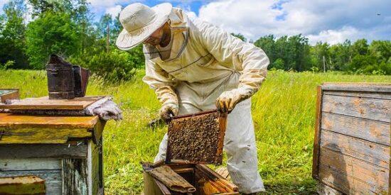 Arıcılık Desteklemeleri 2021 Ne Zaman Ödenecek?